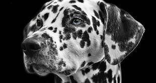 AnimalVitae, para proteger a tu mascota