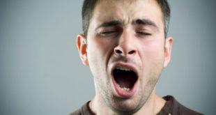 La relación entre la duración del bostezo y el tamaño del cerebro