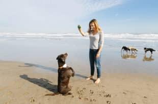 Innovador geolocalizador de mascotas que también cuida de su salud