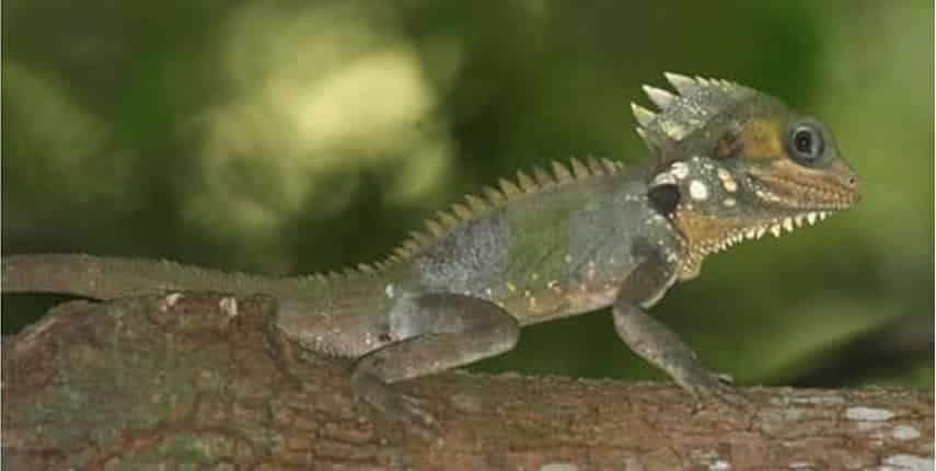 Un lagarto: el primer bípedo