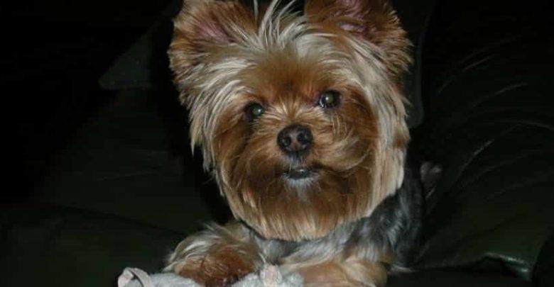 Photo of ¿Qué pasa si mi perro ladra?