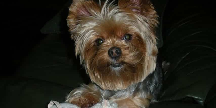 ¿Qué pasa si mi perro ladra?