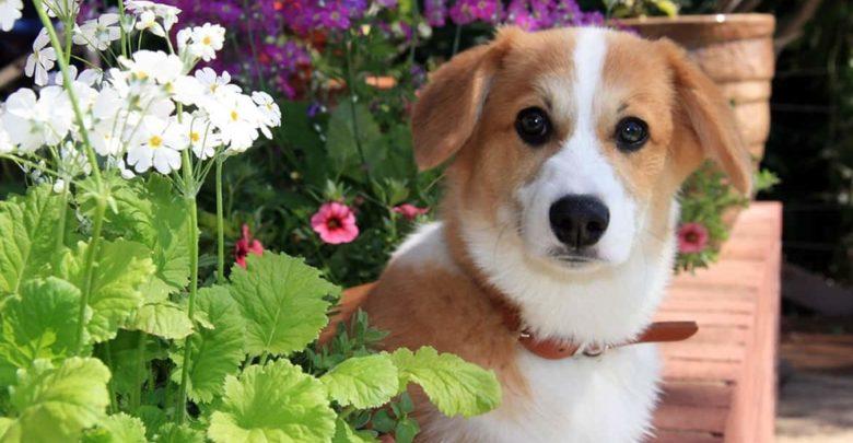 Photo of Cómo vivir con perros