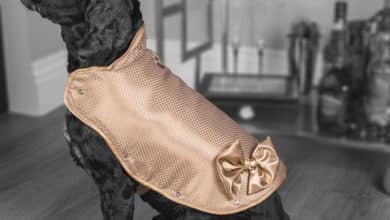 Photo of El chaleco para perros más caro del mundo: 1 millón de libras esterlinas