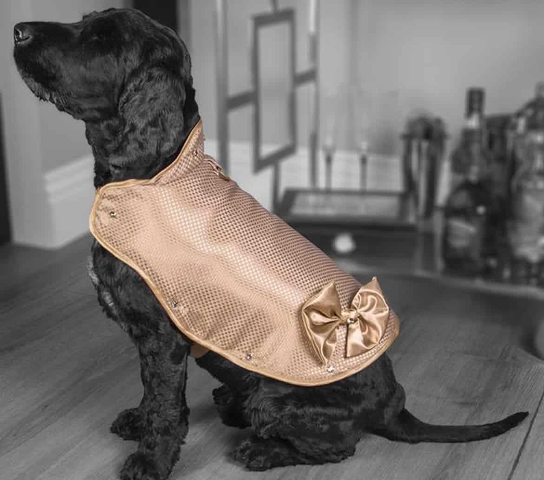 El chaleco para perros más caro del mundo: 1 millón de libras esterlinas