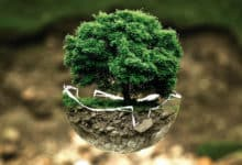 Photo of La conservación del medio ambiente