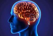 Llega la inmortalidad de la mano de la tecnología: descargar el cerebro en una computadora