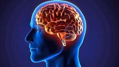 Photo of Llega la inmortalidad de la mano de la tecnología: descargar el cerebro en una computadora