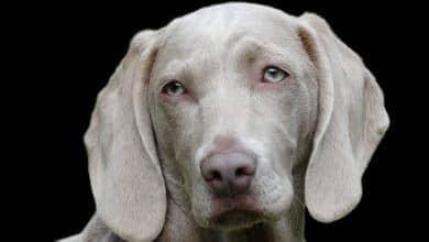 Photo of Los perros son capaces de descifrar lo que las personas muestran en su cara