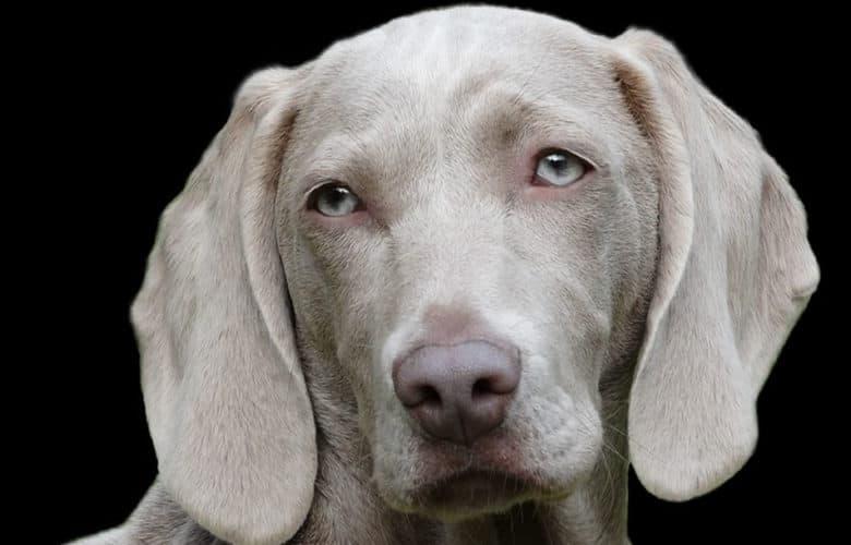 Los perros son capaces de descifrar lo que las personas muestran en su cara