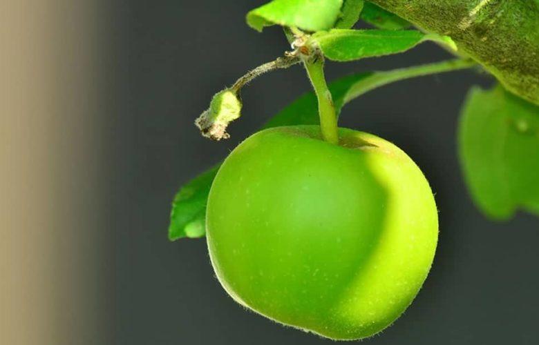 La famosa manzana y el pecado original