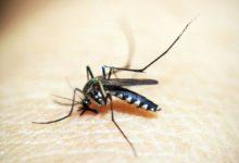 Photo of Por qué los mosquitos pican más a unas personas que a otras