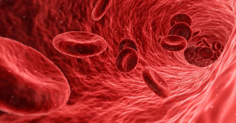 Sangre venosa o arterial