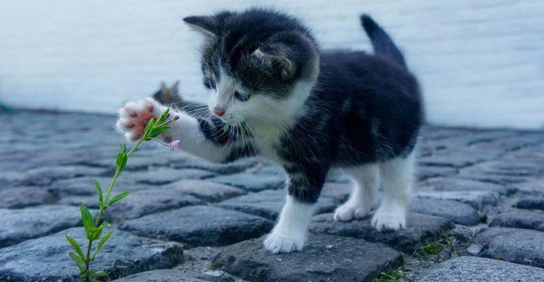 Photo of Cómo afrontar la llegada de un gatito al hogar