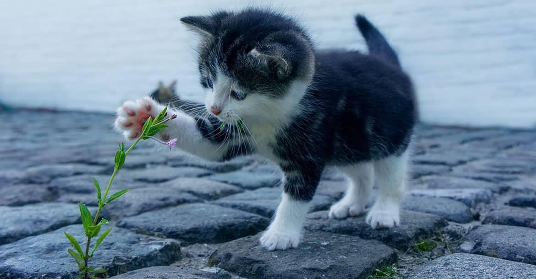 Cómo afrontar la llegada de un gatito al hogar