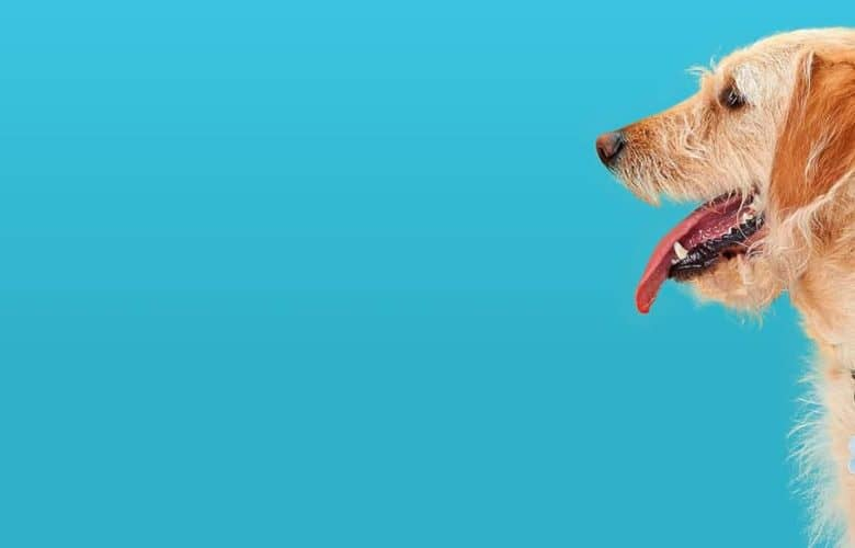 DogBuddy (antes Bibulu), el alojamiento ideal para tu mascota