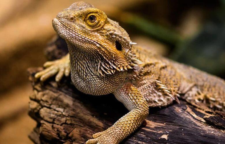 Nuevas normas en la protección de especies amenazadas de fauna y flora