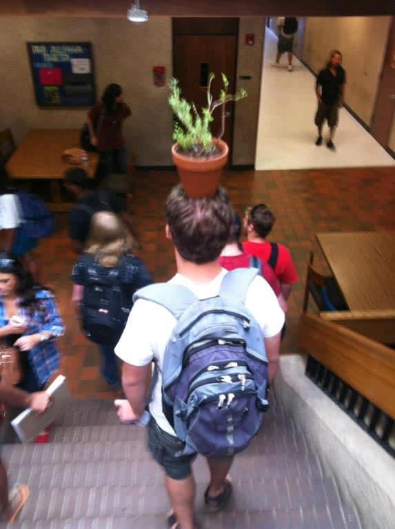 Una planta en la cabeza