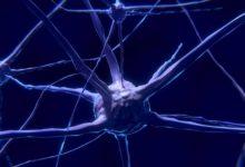 Se ha demostrado que seguimos creando neuronas después de los 87 años