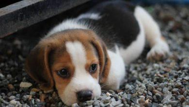 Photo of Acariciar y mimar a mascotas contribuye a la disminución del estrés