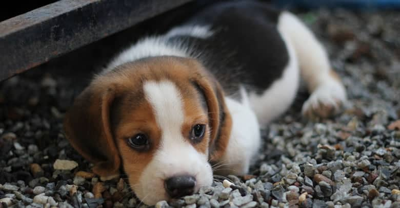 Acariciar y mimar a mascotas contribuye a la disminución del estrés