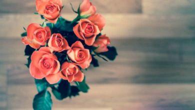 Photo of Regalar rosas, un clásico que no pasa de moda