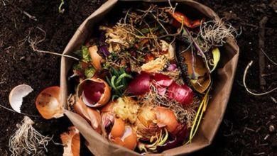 Photo of Cómo transformar los desechos orgánicos en bioplásticos