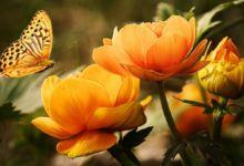 Cómo disfrutar de flores y plantas