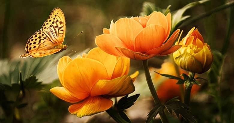 Photo of Cómo disfrutar de flores y plantas
