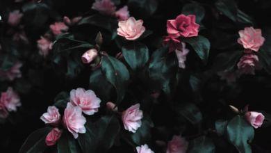 Photo of Las flores, algo más que vegetales