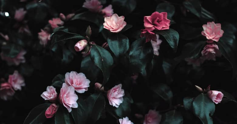 Las flores, algo más que vegetales