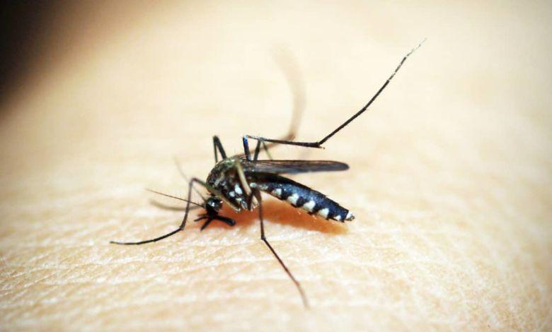 La OMS desmiente cinco mitos sobre el Coronavirus