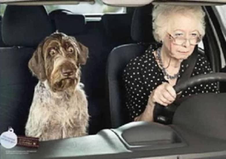 Photo of ¿Qué estará pensando el perro?