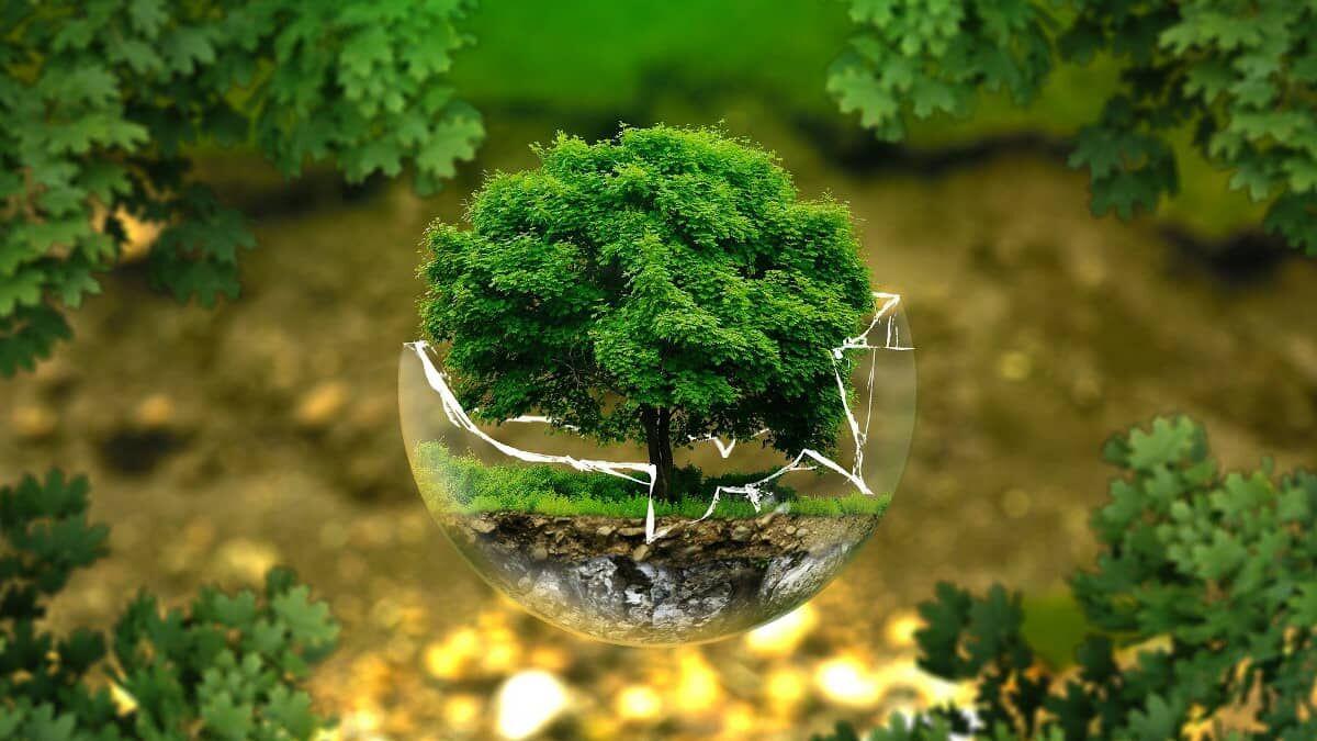 Productos de un solo uso, pero ecológicos