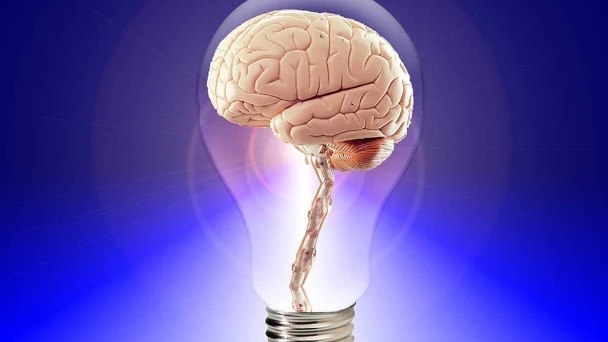 La memoria, un inmenso almacén cerebral