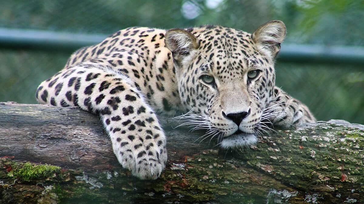 Sobre distribución de los seres vivos sobre la Tierra