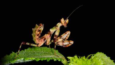 iNaturalist, para los amantes de la Naturaleza