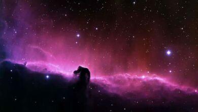 ¿Hay más formas de vida en el Universo?