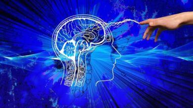 Vencer la soledad averiguando como procesa el cerebro las emociones