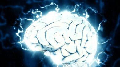 Investigación que consideraba el cerebro como una red similar a Internet