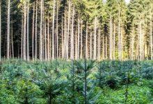 Las mejores prácticas de silvicultura sostenible