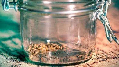 ¿Cuánto tiempo se pueden conservar las semillas de cannabis?
