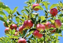 La Física y las manzanas