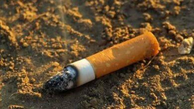 Las colillas de los cigarros producen un enorme daño en las plantas